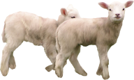 Goat Free PNG Image Download 4