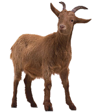 Goat Free PNG Image Download 7
