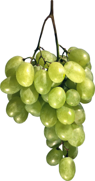 Grape Free PNG Image Download 1