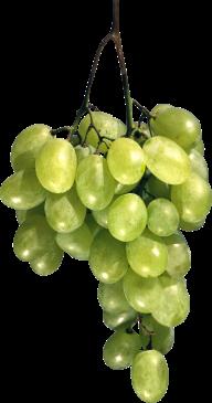 Grape Free PNG Image Download 1
