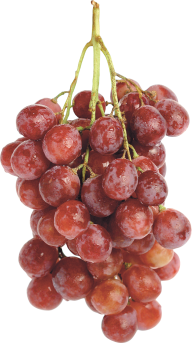 Grape Free PNG Image Download 10