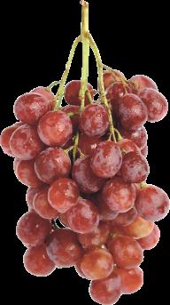 Grape Free PNG Image Download 10