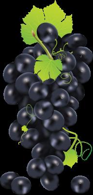 Grape Free PNG Image Download 11