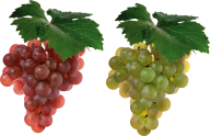 Grape Free PNG Image Download 12