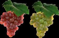 Grape Free PNG Image Download 12