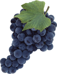 Grape Free PNG Image Download 13