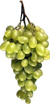 Grape Free PNG Image Download 15