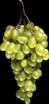 Grape Free PNG Image Download 15