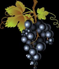 Grape Free PNG Image Download 16