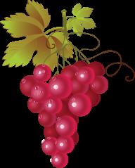 Grape Free PNG Image Download 18