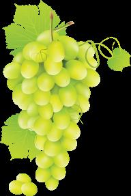 Grape Free PNG Image Download 19