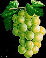 Grape Free PNG Image Download 24