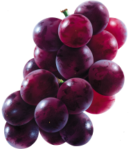Grape Free PNG Image Download 25