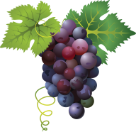 Grape Free PNG Image Download 29