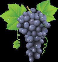 Grape Free PNG Image Download 6