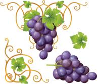 Grape Free PNG Image Download 7