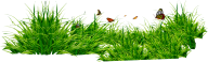 Grass Free PNG Image Download 1