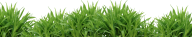 Grass Free PNG Image Download 11
