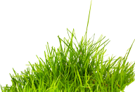 Grass Free PNG Image Download 12
