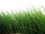 Grass Free PNG Image Download 13