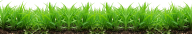 Grass Free PNG Image Download 14