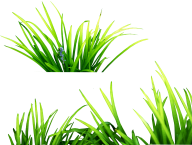 Grass Free PNG Image Download 15