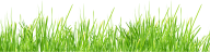 Grass Free PNG Image Download 16