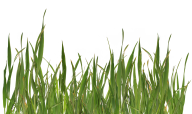 Grass Free PNG Image Download 19