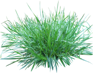Grass Free PNG Image Download 24