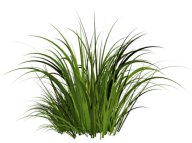 Grass Free PNG Image Download 25