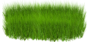 Grass Free PNG Image Download 27