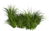 Grass Free PNG Image Download 30