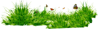 Grass Free PNG Image Download 35