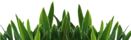 Grass Free PNG Image Download 36