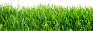Grass Free PNG Image Download 8