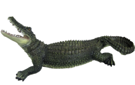 Green Crocodile Png