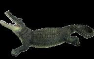 Green Crocodile Png