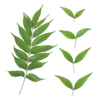 Green Leaves Free PNG Image Download 1