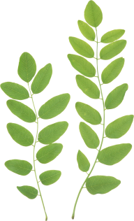 Green Leaves Free PNG Image Download 11