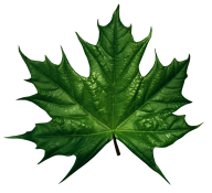 Green Leaves Free PNG Image Download 12