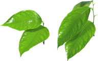 Green Leaves Free PNG Image Download 13