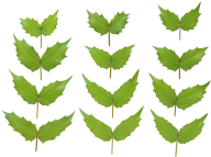 Green Leaves Free PNG Image Download 14