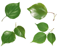 Green Leaves Free PNG Image Download 16