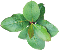 Green Leaves Free PNG Image Download 17
