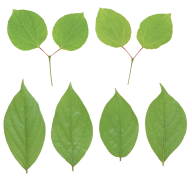 Green Leaves Free PNG Image Download 18