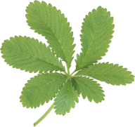 Green Leaves Free PNG Image Download 19