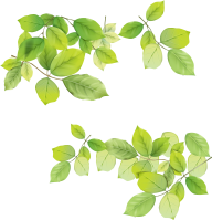 Green Leaves Free PNG Image Download 2