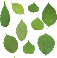 Green Leaves Free PNG Image Download 21