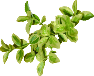 Green Leaves Free PNG Image Download 22