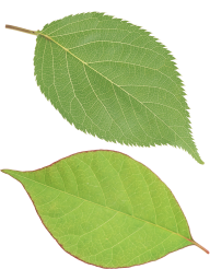 Green Leaves Free PNG Image Download 25